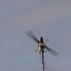 1dfh-5-eierfliegen-gechingen-135