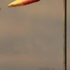 8. Eierfliegen MSG Gechingen