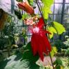 Botanischer Garten Tübingen 05.08.2015