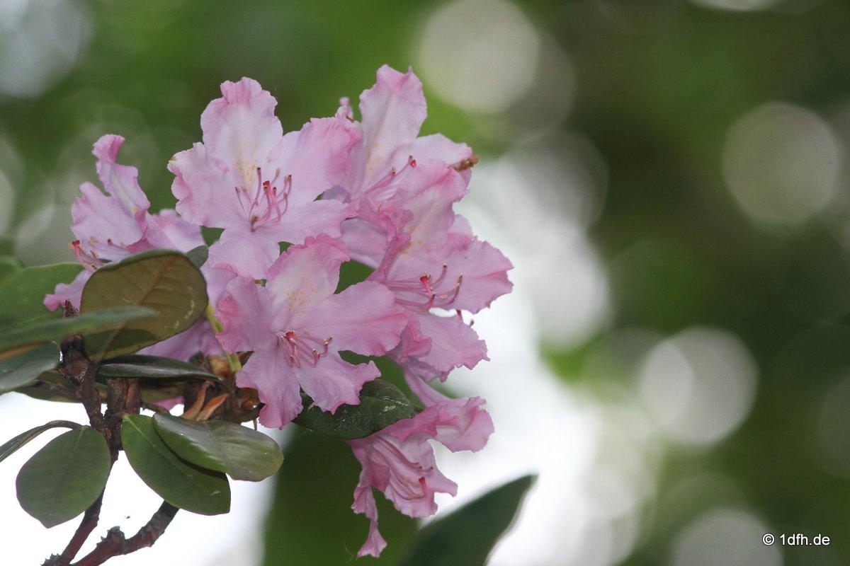 Botanischer Garten Tübingen 17.05.2015