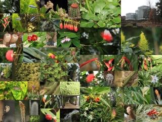 Botanischer Garten Tübingen 02.03.2014