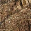 Märzenbecher Dapfen