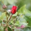 Garten 03.06.2012
