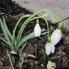 Garten 05.03.2010