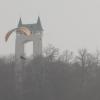 Gleitschirm am Schönbergturm