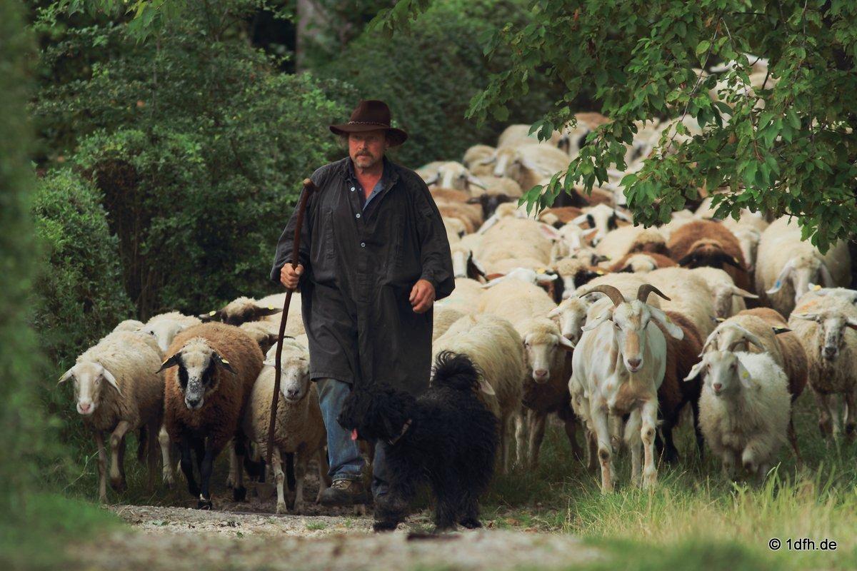 Georgenberg Schafe