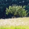 Naturschutzgebiet Listhof 21.07.2017