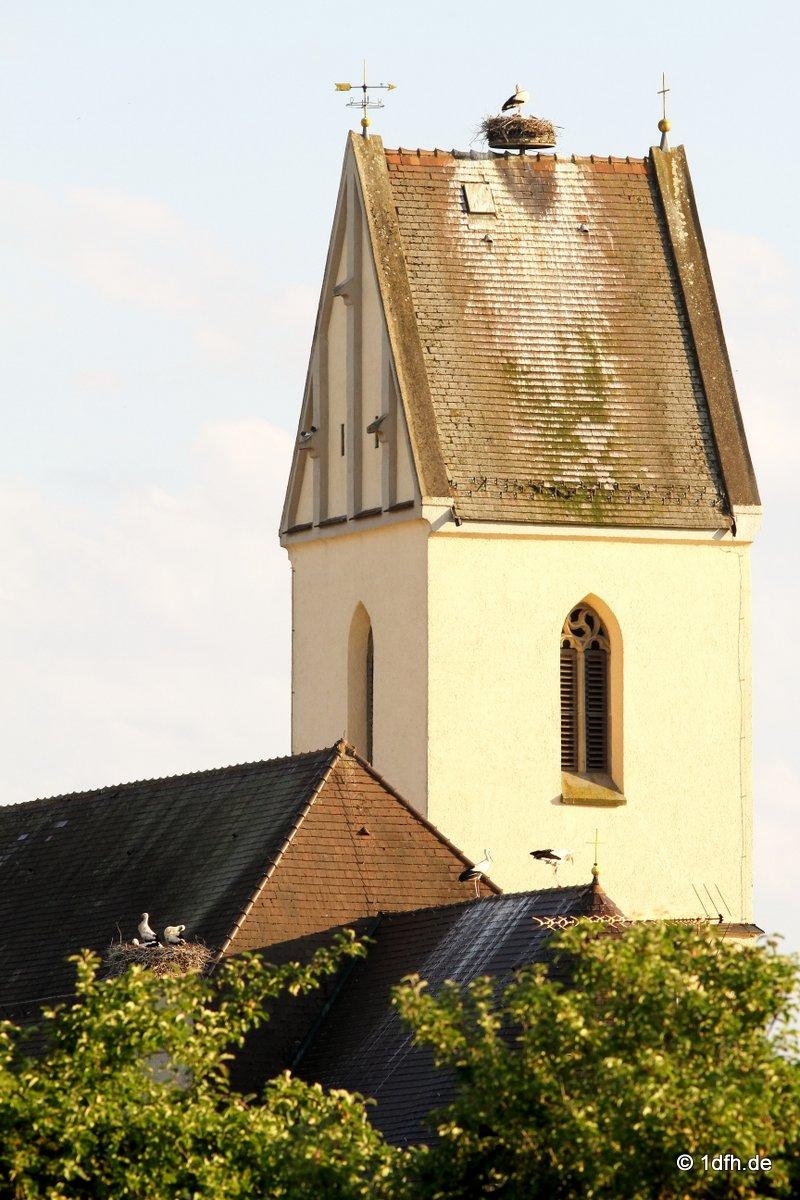 Störche, Herbertingen